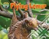 Flying Lemur