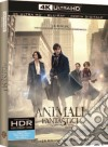Animali Fantastici E Dove Trovarli (Blu-Ray 4K Ultra HD+Blu-Ray) dvd
