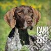 Cani. Calendario 2017 libro