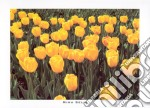 Field of Yellow Tulips, 2000 poster di MINA SELIS