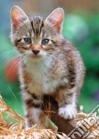 Gattino nel fienile puzzle