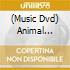 Animal Collective - Grass
