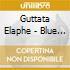 Guttata Elaphe - Blue Trip