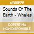 Sounds Of The Earth - Whales